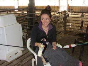 millking goats