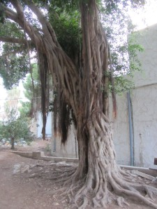 the roots of tree